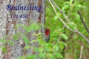 Birdnestinglot450_600px
