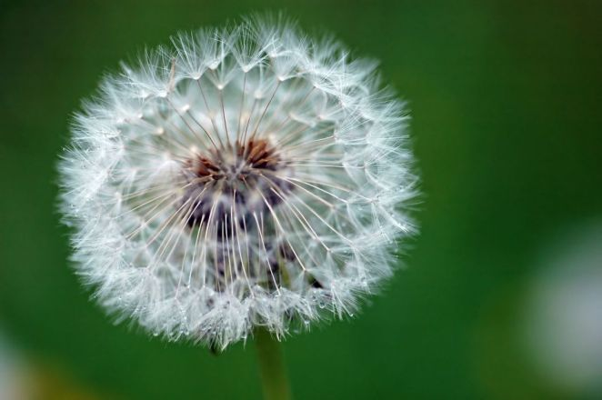 What's not to like about dandelions?