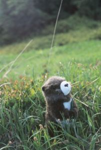 How about a plush marmot?