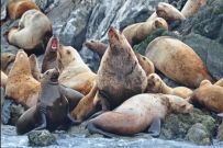 I did not know this...but sea-lions have REALLY terrible breath.