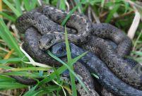 more snake-lovin'