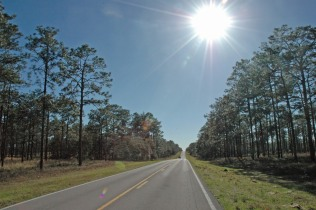 On the road through Ocala National Forest