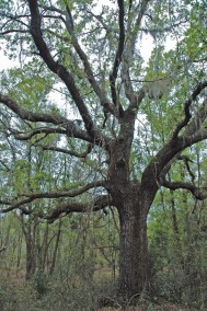 Payne's Prairie State Reserve, Florida's first, near Gainesville.
