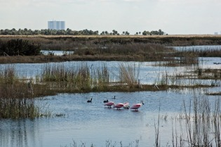 Roseate spoonbills and the Vehicle assembly building - I just love the Merritt Island National Wildlife Refuge!