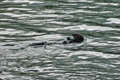 My first sea otters!